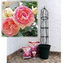 つるバラ栽培セット:ピエール・ド・ロンサール大苗長尺と鉢・オベリスク・用土・肥料のセット