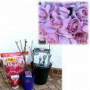 バラ栽培セット:デルバールローズ:ローズシナクティフ大苗とミニオベリスク・鉢・用土・肥料のセット