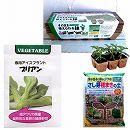 春秋まき種の苗つくりセット:食用アイスプラント プリアン