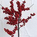ウメモドキ:大納言樹高1.4〜1.5m根巻き