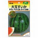 [野菜タネ]スイカ:大玉すいか新大和