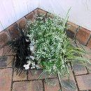 おためし4種3株セット:寄せ植えの下草類Aセット