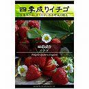 [野菜タネ]イチゴ:四季成りイチゴ*