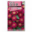 [タキイ 花タネ]百日草:夏花壇に最適 ザハラ ダブルストロベリー