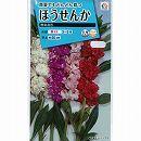 [タキイ 花タネ]ホウセンカ:椿咲混合