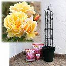 つるバラ栽培セット:ソレイユ・ヴァルティカル大苗長尺と鉢・オベリスク・用土・肥料のセット