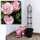 つるバラ栽培セット:春がすみ 大苗長尺と鉢・オベリスク・用土・肥料のセット
