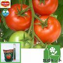 トマトのかんたん栽培セット:ぜいたくトマト