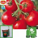 [17年4月中旬予約]トマトのかんたん栽培セット:フルーツルビーEX