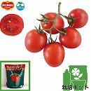 [17年4月中旬予約]トマトのかんたん栽培セット:フルーティートマト赤