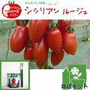 [17年4月中旬予約]トマトのかんたん栽培セット:シシリアンルージュ自根苗