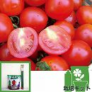 [17年4月中旬予約]トマトのかんたん栽培セット:天使のトマト