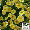 カリブラコア:スーパーベル レモンスライス3号ポット2株セット