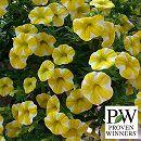 カリブラコア:スーパーベル レモンスライス3号ポット6株セット