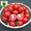 ミニトマト:天使のトマト3号ポット2株セット