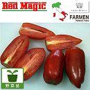 料理用イタリアントマト:サンマルツァーノレッドマジック3.5号ポット2株セット