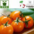 [17年4月中旬予約]生食用イタリアントマト無農薬シリーズ:イタリアンゴールド3.5号ポット24株セット