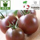 [17年4月中旬予約]生食用イタリアントマト無農薬シリーズ:イタリアングレープ3.5号ポット24株セット