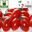 [17年4月中旬予約]生食用イタリアントマト無農薬シリーズ:イタリアンプラムレッド3.5号ポット12株セット