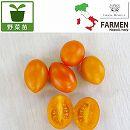 生食用イタリアントマト無農薬シリーズ:イタリアンプラムオレンジ3.5号ポット2株セット