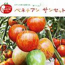 イタリアントマト:ベネチアンサンセット3号ポット2株セット