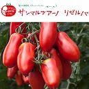 イタリアントマト:サンマルツァーノリゼルバ3号ポット2株セット