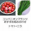 コンパニオンプランツ栽培セット:トマト(ミニ)天使のトマトとニラ