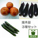 野菜接木苗3種セット(トマト麗夏・ナスとげなし千両2号・キュウリうどんこつよし)