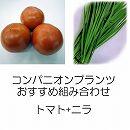 コンパニオンプランツ栽培セット:トマト(大玉)麗夏(れいか・王様トマト)接木苗とニラ