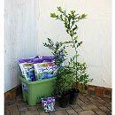 ブルーベリー栽培セット:暖地・一般地向き5号苗2種(ホームベル・ティフブルー)楽々菜園750型