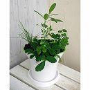 ハーブ4種のハーブポット栽培セット:イタリアンパセリ・チャイブス・セージ・ワイルドストロベリー