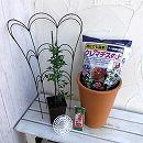 クレマチスの鉢栽培セット:ウィズレイ・クリーム