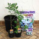 ブルーベリー栽培セット:ミスティーとオニール