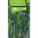 [タキイ 花タネ]ラベンダー:レースラベンダー オリガノの種