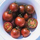 [濃えんじ色のおいしいミニトマト 春まき 野菜タネ]トマト:ブラックチェリートマト