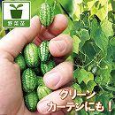 [17年4月中旬予約]一粒キュウリ:プチキュー3号ポット6株セット (野菜の苗)