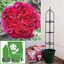つるバラ栽培セット:フォールスタッフ大苗と鉢・オベリスク・用土・肥料付き