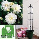 つるバラ栽培セット:スノー・グース大苗と鉢・オベリスク・用土・肥料付き