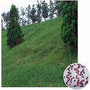 芝の種:西洋芝センチピートグラス1kg
